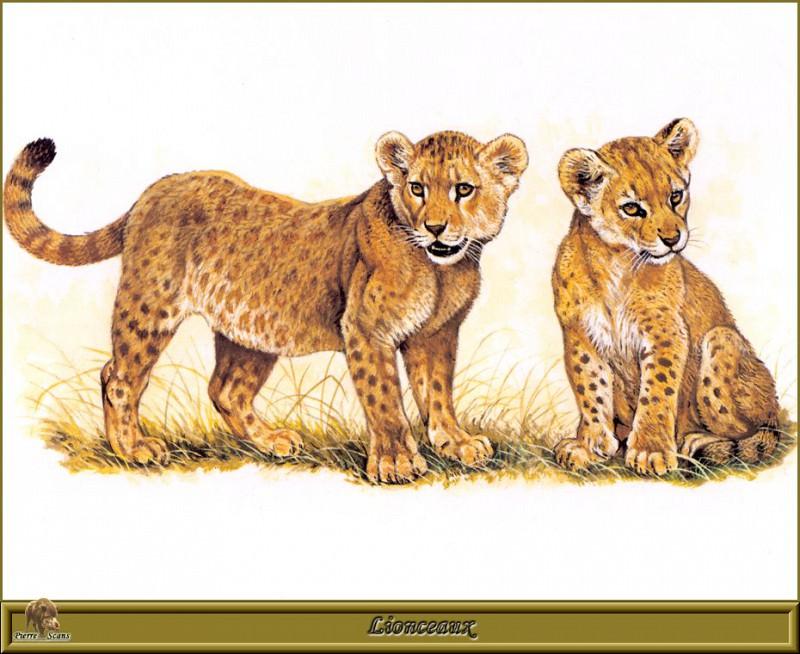 Lionceaux. Robert Dallet