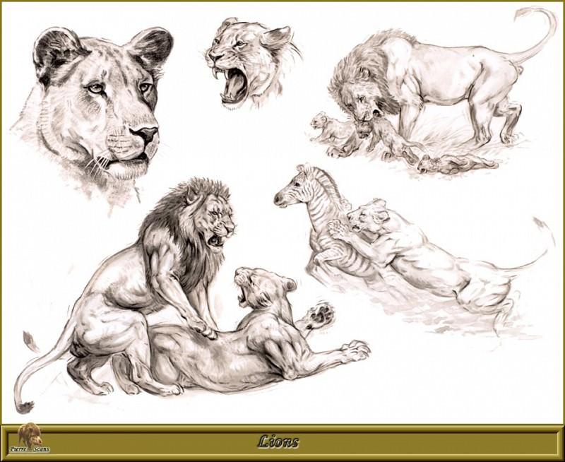 PO pfrd 111 Lions. Robert Dallet