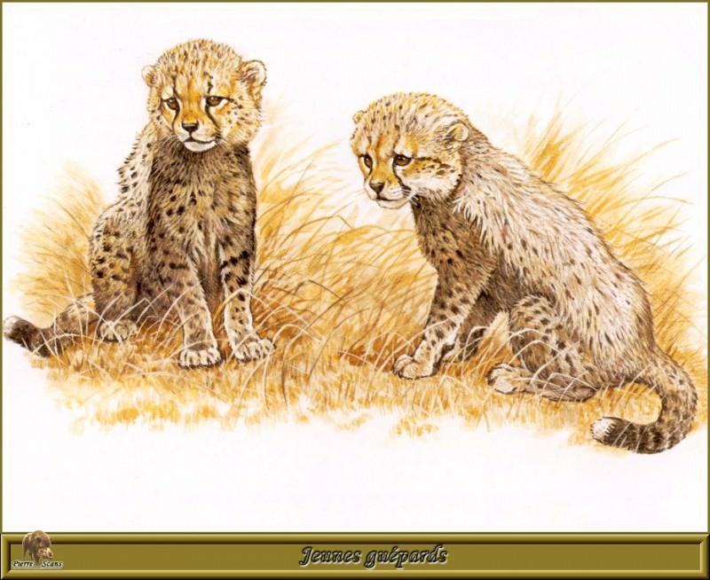 Маленькие гепарды. Роберт Даллет
