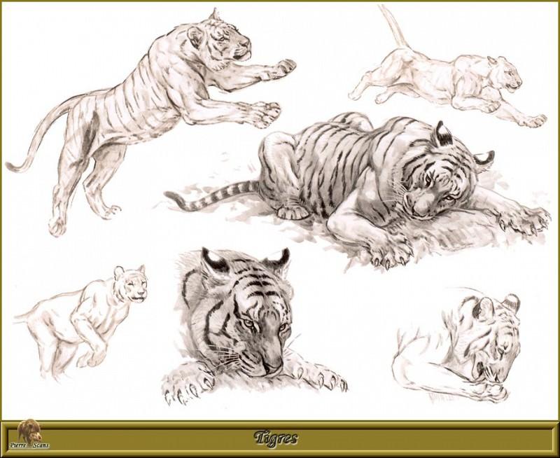 Tigres. Robert Dallet