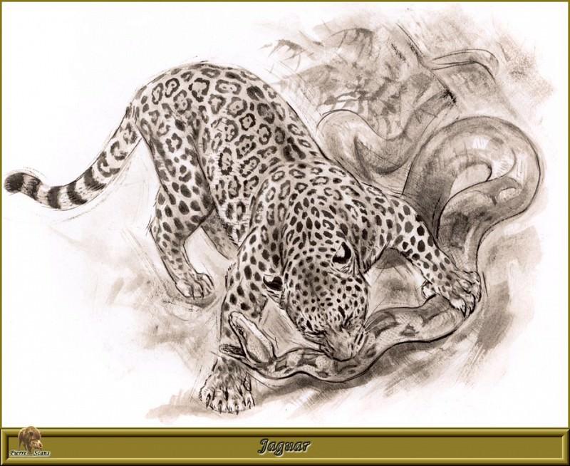 Jaguar. Robert Dallet