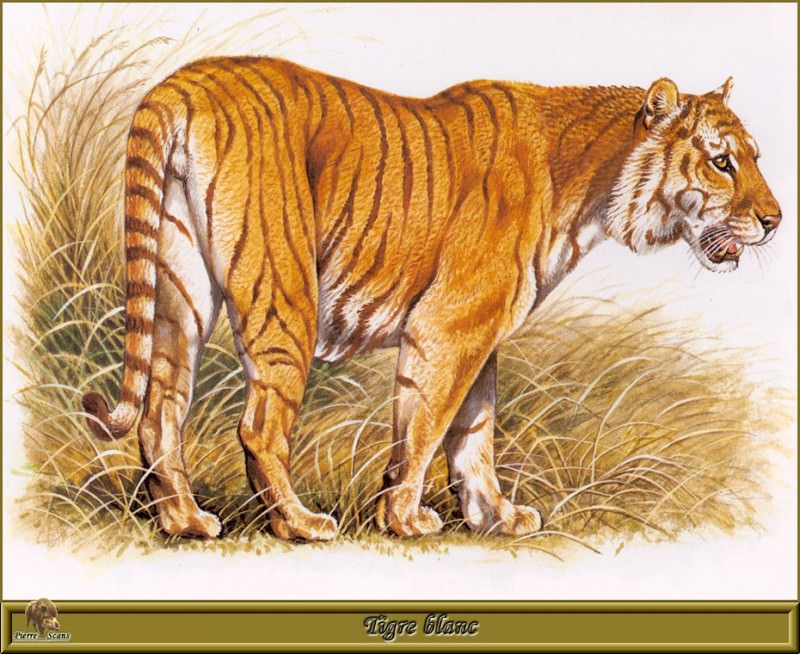 Рыжий тигр. Роберт Даллет