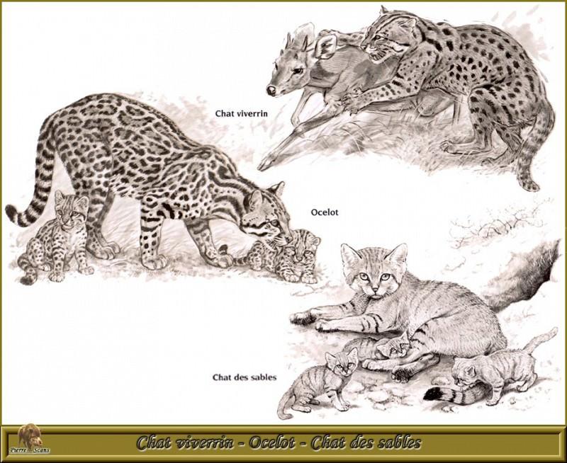 Виверра Оцелот Песчаная дикая кошка. Роберт Даллет