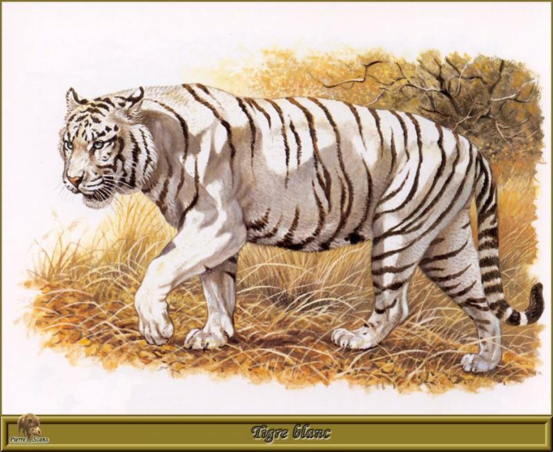 Белый тигр. Роберт Даллет