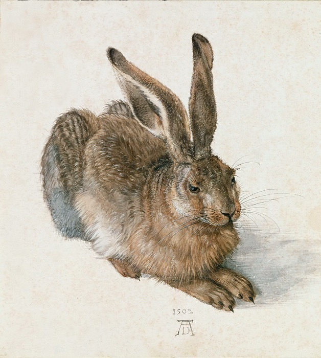Молодой заяц («Заяц Дюрера» или «Адский заяц»). Альбрехт Дюрер