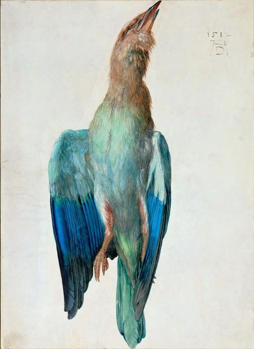 Roller Bird. Albrecht Dürer
