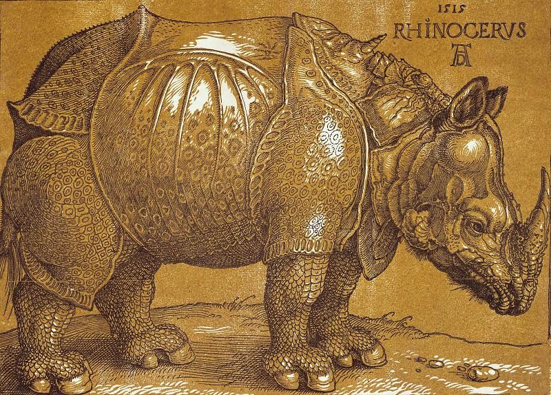 Rhinoceros. Albrecht Dürer