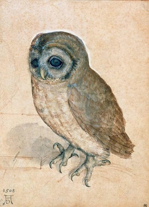 Little Owl. Albrecht Dürer