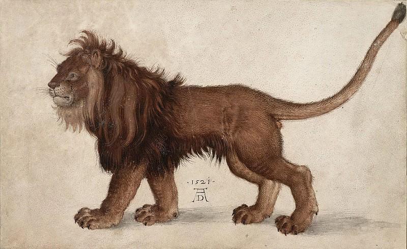 Lion. Albrecht Dürer