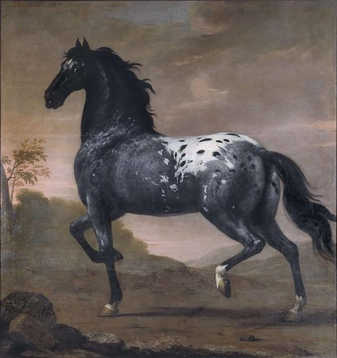 Karl XI livestock Blue Tiger. David Klöcker Ehrenstråhl