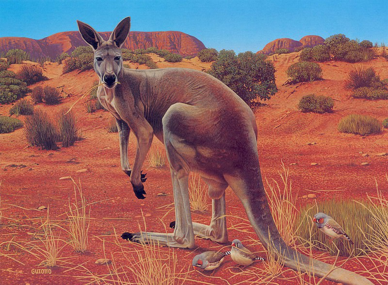 Red Kangaroo Painting. Ego Guiotto