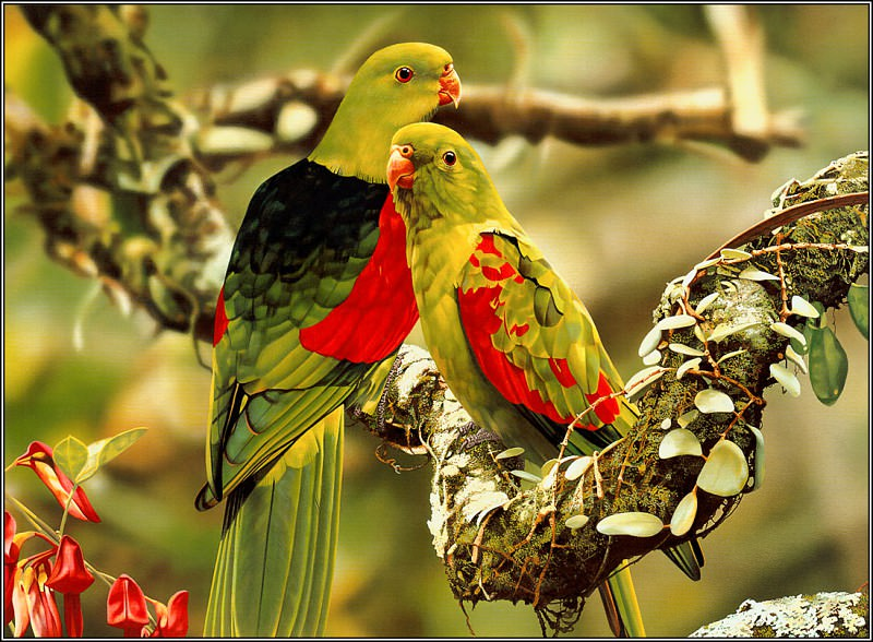 Red WingedParrot. Ego Guiotto