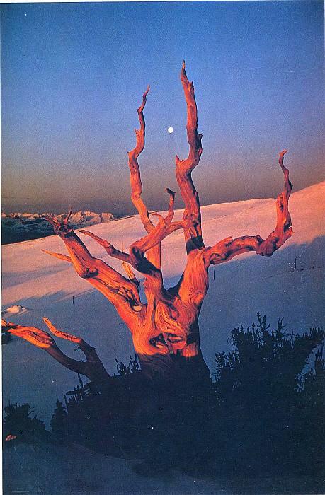 Funny 174. Гален Роуэлл - гора света