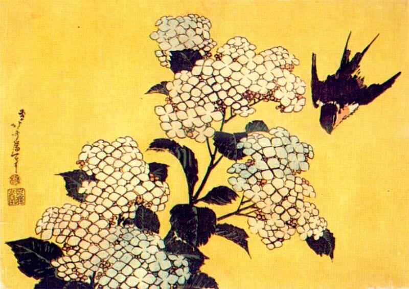 hydrangea and swallow 1834. Hokusai