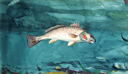 Channel Bass. Winslow Homer
