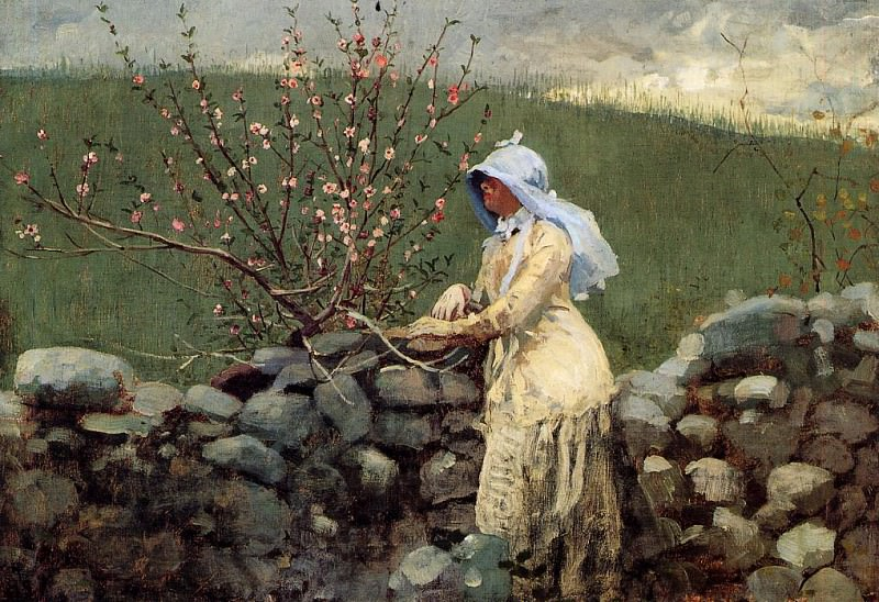 Peach Blossoms. Winslow Homer