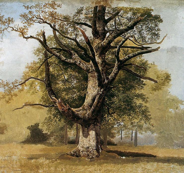 Beech tree. Barend Cornelis Koekkoek