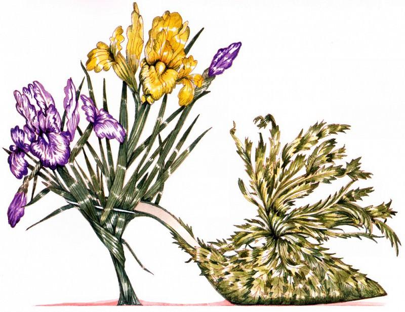 Iris & Escarole. Dennis Kyte