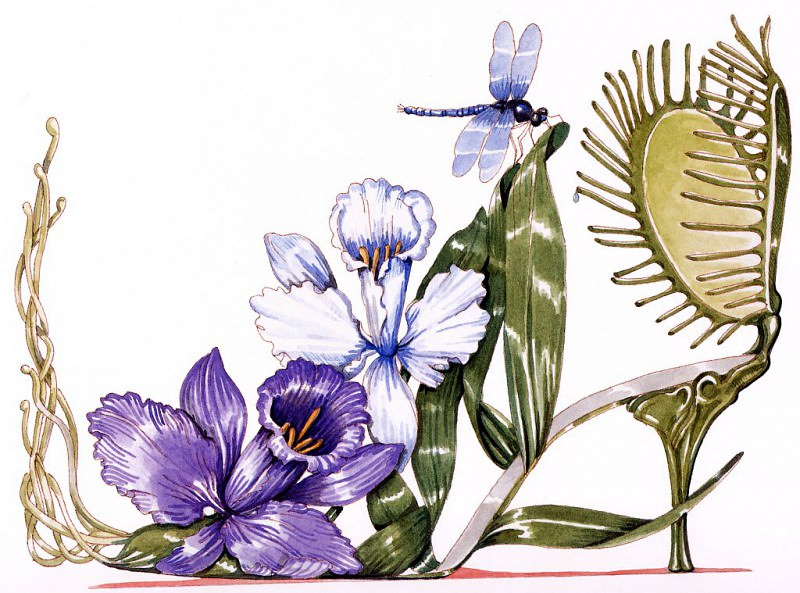 Orchid & Venus Fly Trap. Dennis Kyte