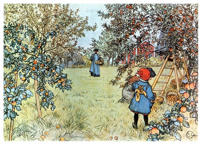 1903 Apple Harvest watercolor. Carl Larsson