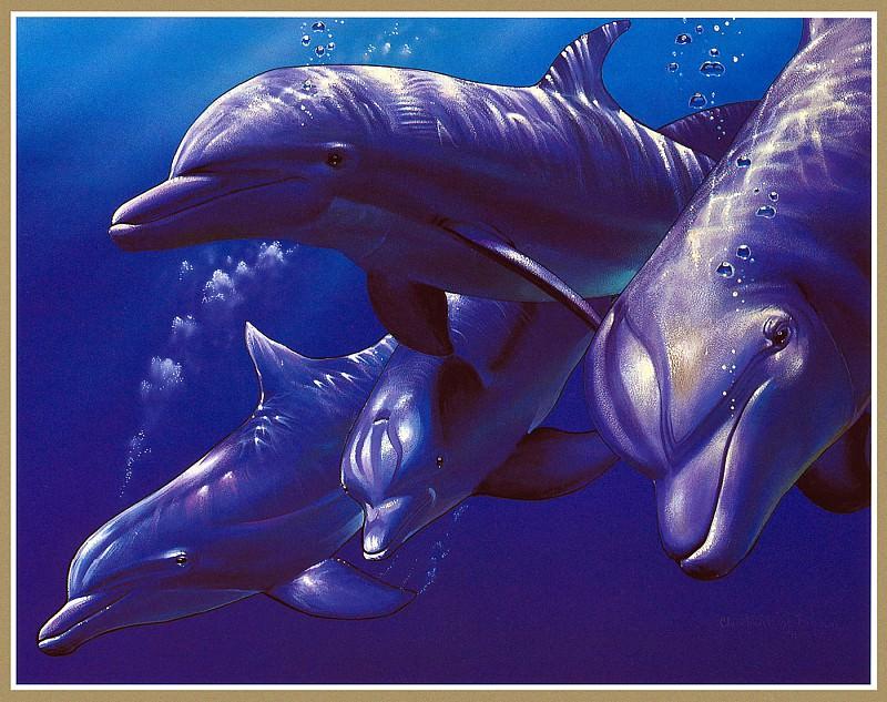 Дельфиньи поиски. Кристиан Риес Лассен