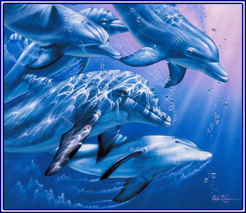 Dolphin Quest. Christian Riese Lassen