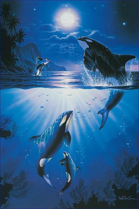 Мистические дельфины-косатки. Кристиан Риес Лассен