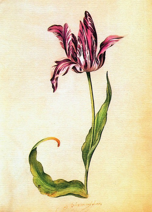 Tulips. Judith Leyster