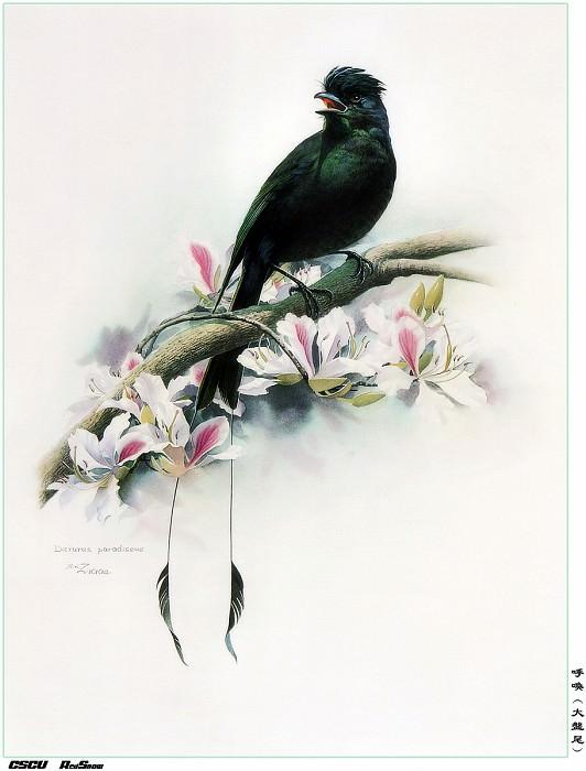 RedSnow CSCU Painting of ZengXiaoLian 16. Сяо Цзэн Лиан