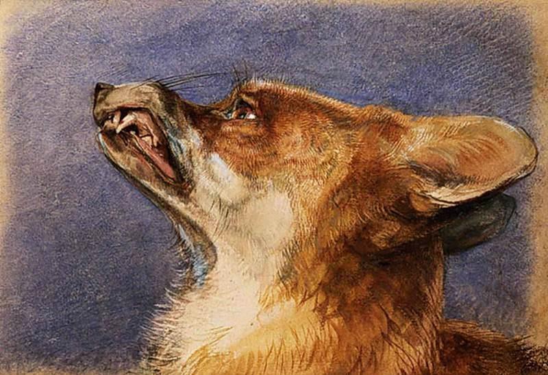 Head of a Fox. John Frederick Lewis