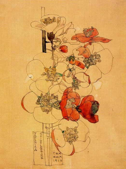 Айва японская или камелия. Чарльз Ренни Макинтош