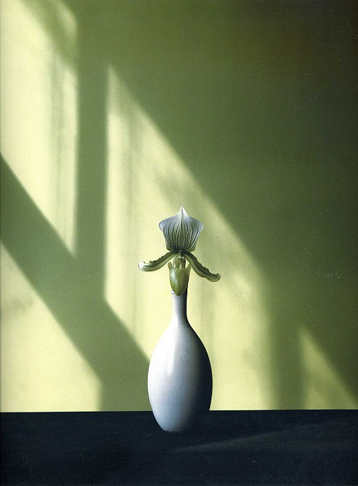 art 195. Robert Mapplethorpe
