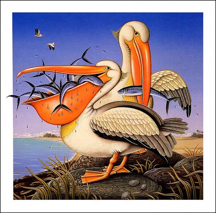 The Pelicans Bill. James Marsh