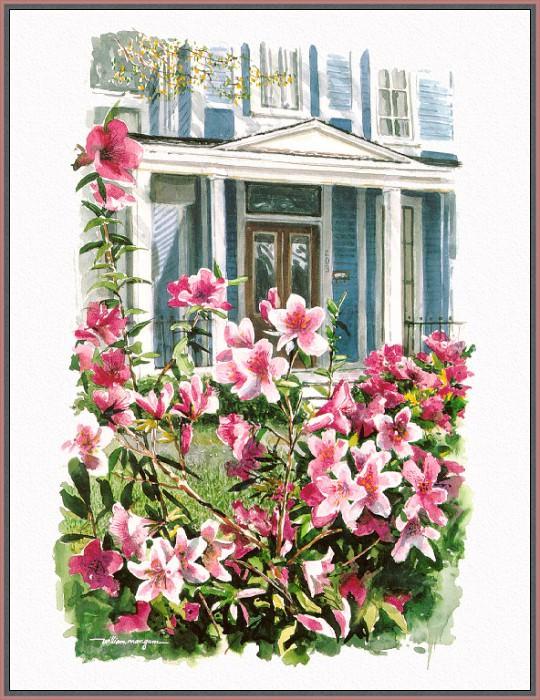 Azalea Blossoms. William Mangum
