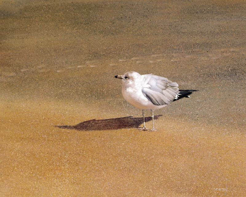 The Seagull. Nancy Noel