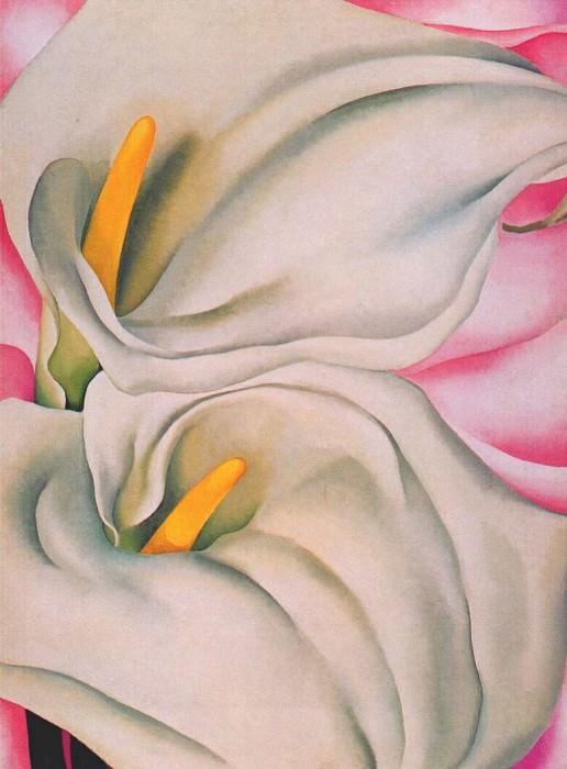 На калы на розовом фоне, 1928. Джорджия ОКиф