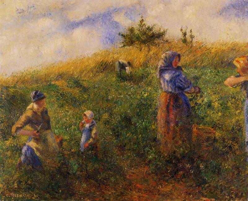 Сбор гороха (1880). Камиль Писсарро