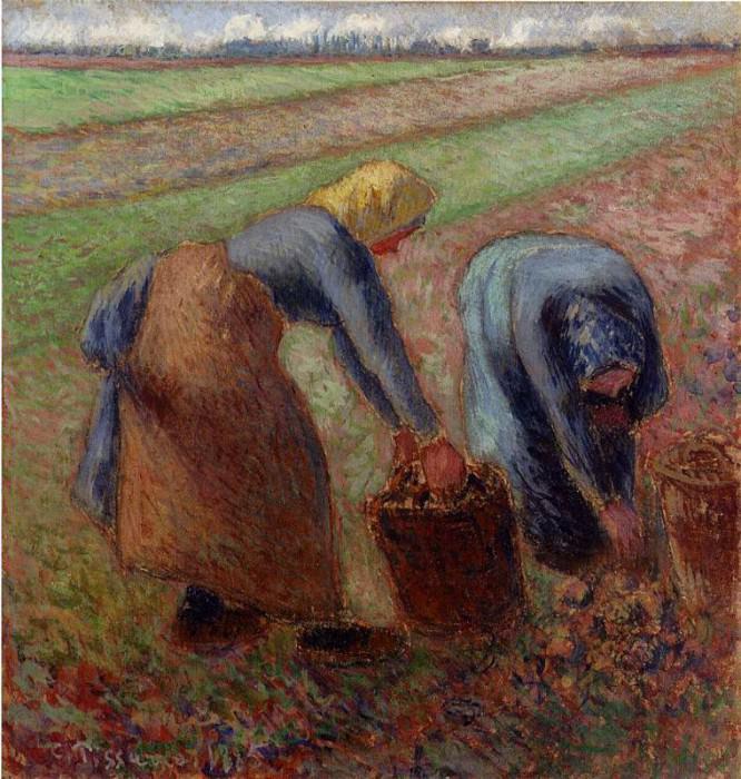 Сбор урожая картофеля (1885). Камиль Писсарро