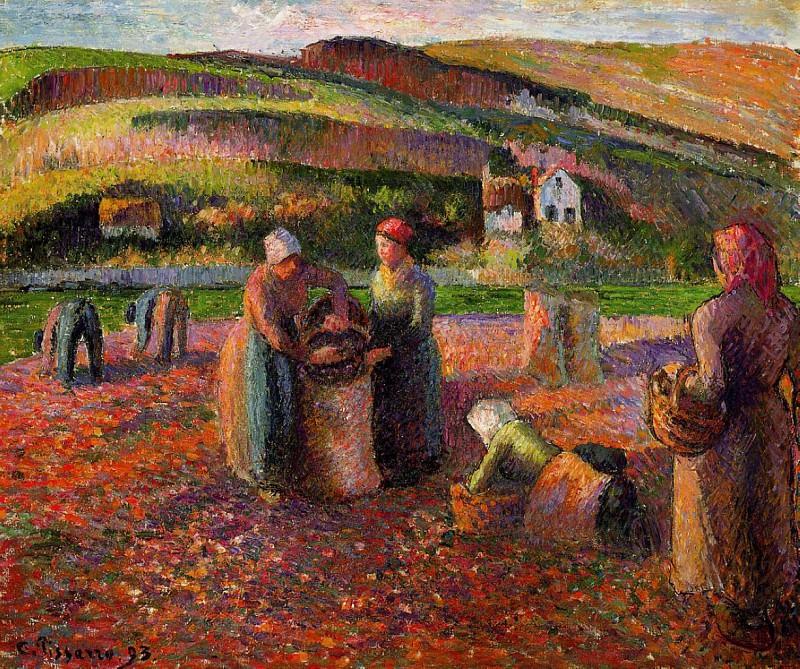 Сбор урожая картофеля (1893). Камиль Писсарро
