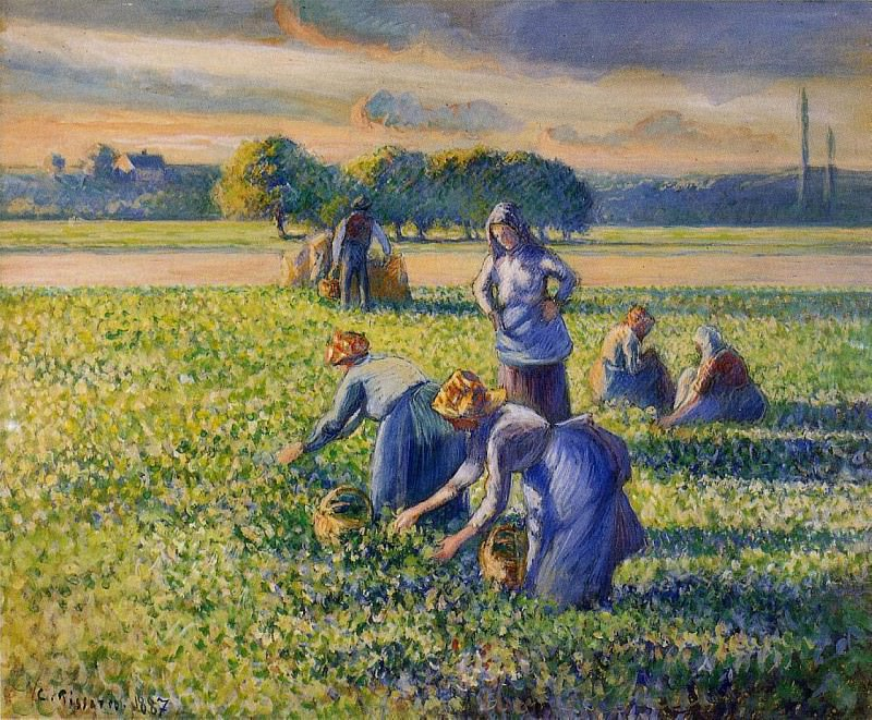 Picking Peas. (1887). Camille Pissarro
