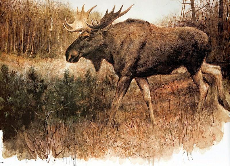 Дикая природа #243. Рин Поортвлит