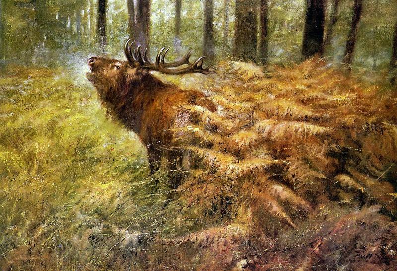 Дикая природа #153. Рин Поортвлит