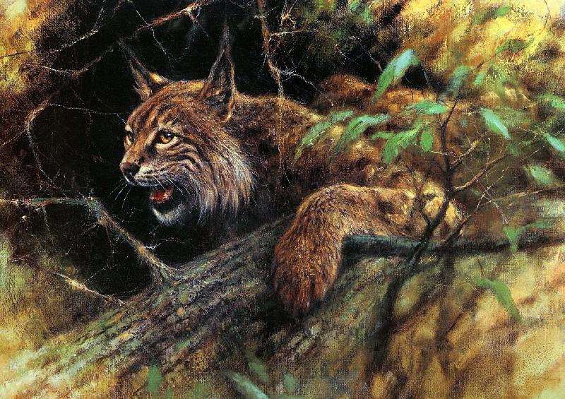 Дикая природа #89. Рин Поортвлит