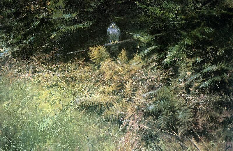 Дикая природа #167. Рин Поортвлит