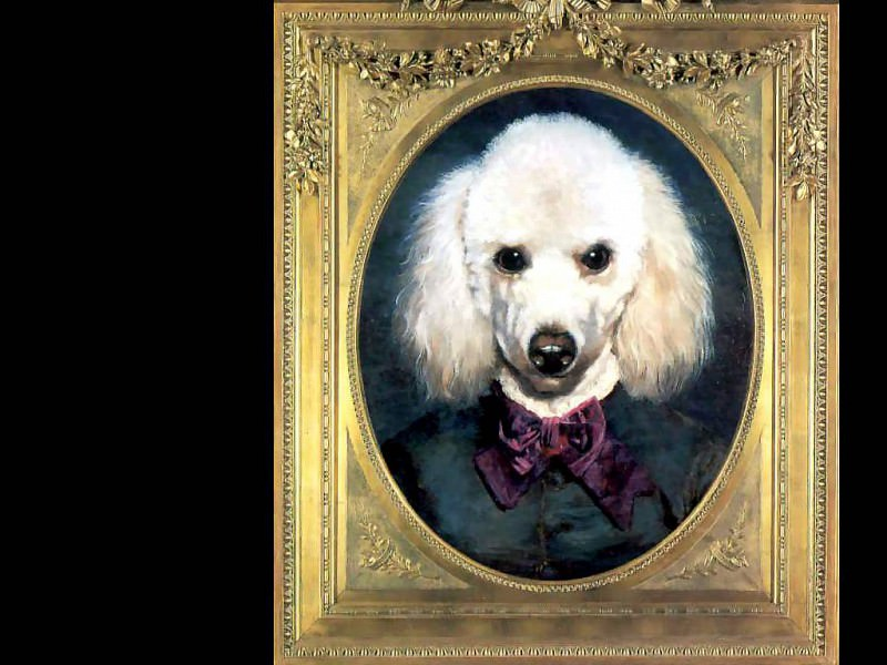 dog portraits marie clair dubossy. Thierry Poncelet