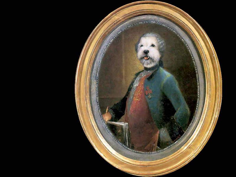 dog portraits le vicomte de dogerelle. Thierry Poncelet