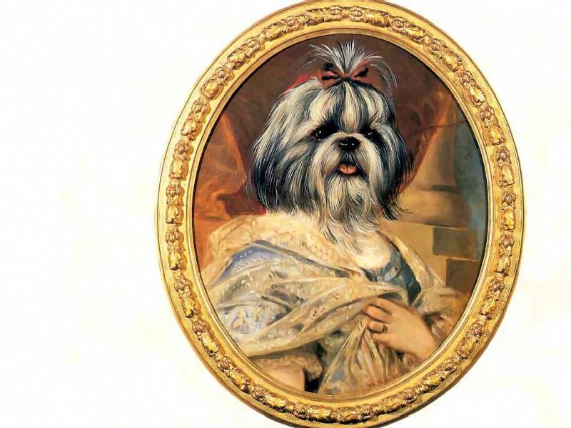 dog portraits dona marissa navarro. Thierry Poncelet