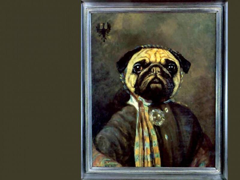 dog portraits madame dr hortense de mops. Thierry Poncelet