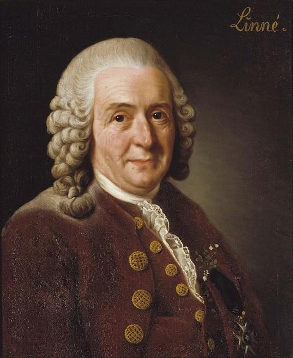 Carl von Linné (1707-1778), botanist, professor. Alexander Roslin