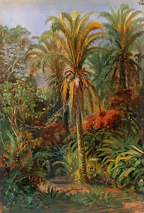 Palm Trees. Johann Rugendas